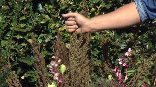Jardín en otoño con plantas de follaje rosa - Astilbes