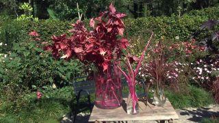 Jardín en otoño con plantas de follaje rosa - Composición floral