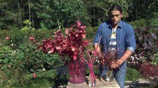 Jardín en otoño con plantas de follaje rosa - Composición floral pennisetum