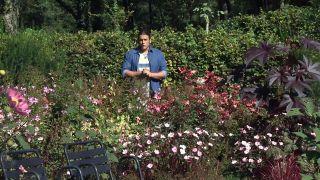 Jardín en otoño con plantas de follaje rosa - Detalle