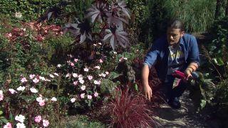 Jardín en otoño con plantas de follaje rosa - Detalle borde de jardín