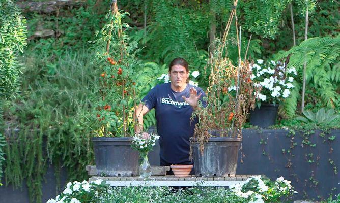 Comienza la nueva temporada 2018 2019 de jardiner a en - Bricomania jardineria ...