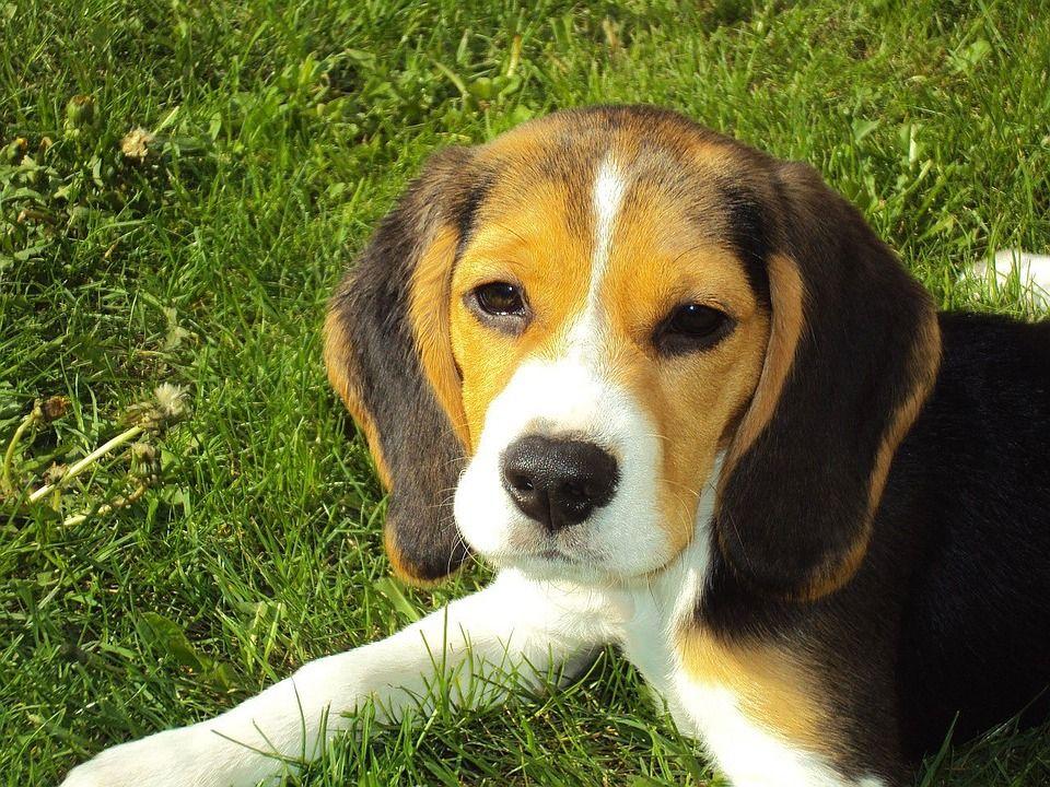 Maneras de combatir los parásitos externos de nuestros perros