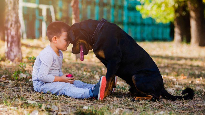 Resultado de imagen para miedo a los perros