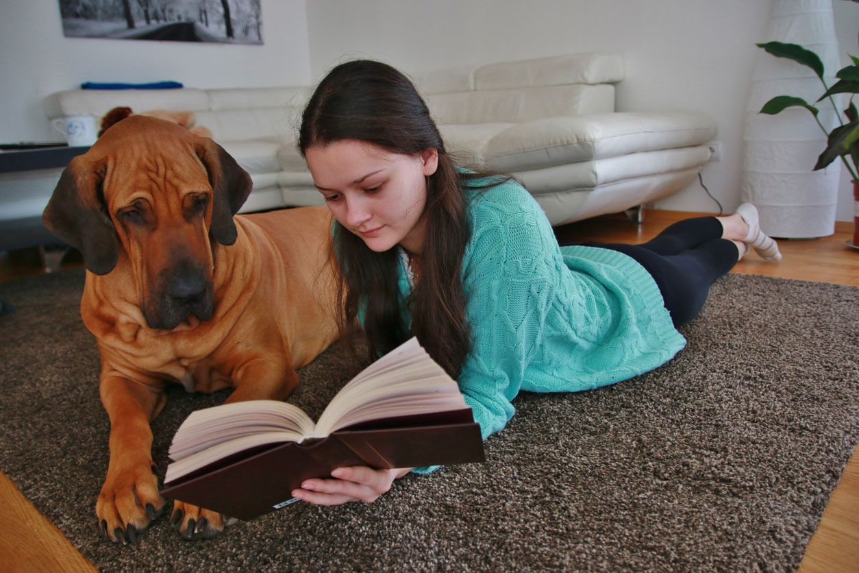 Los perros grandes son más tranquilos.
