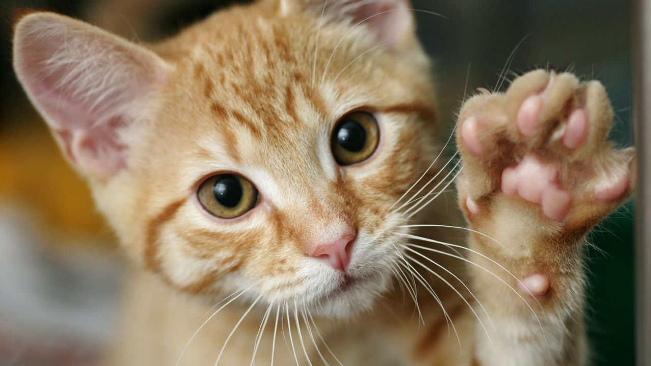 7 cosas que a tu gato no le gustan - Hogarmania