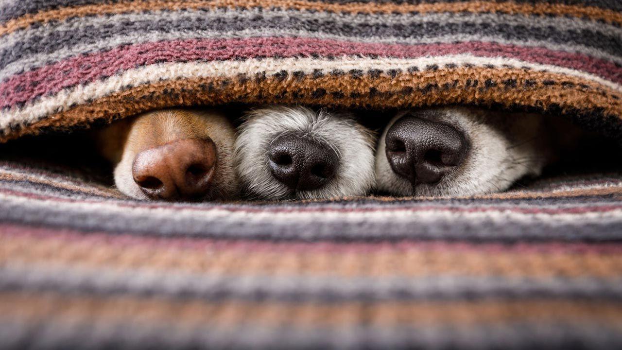 Tocar la nariz del perro.