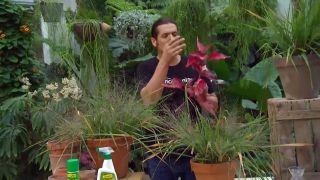 Eraglotis para arreglos florales