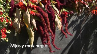 El mijo y el maíz negro - Detalle jardín granate