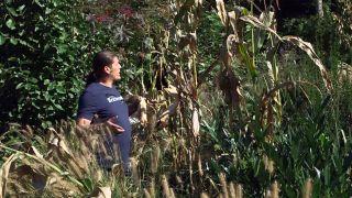 El mijo y el maíz morado - Maíz características