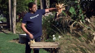 El mijo y el maíz negro - Decorar con mazorcas de maíz morado