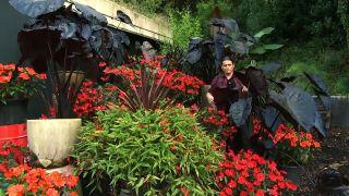 Composición de plantas en tonos negros y rojos