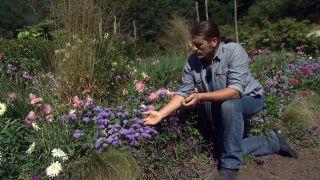 Parterre otoñal con plantas de flor de temporada - Ageratum características