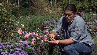Parterre otoñal con plantas de flor de temporada - Ageratum semillas