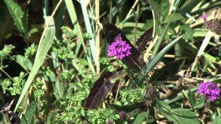 Parterre otoñal con plantas de flor de temporada - Berbena