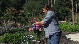 Parterre otoñal con plantas de flor de temporada - Composición floral Zinnias