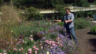 Parterre otoñal con plantas de flor de temporada - Inicio