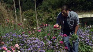 Parterre otoñal con plantas de flor de temporada - Zinnia