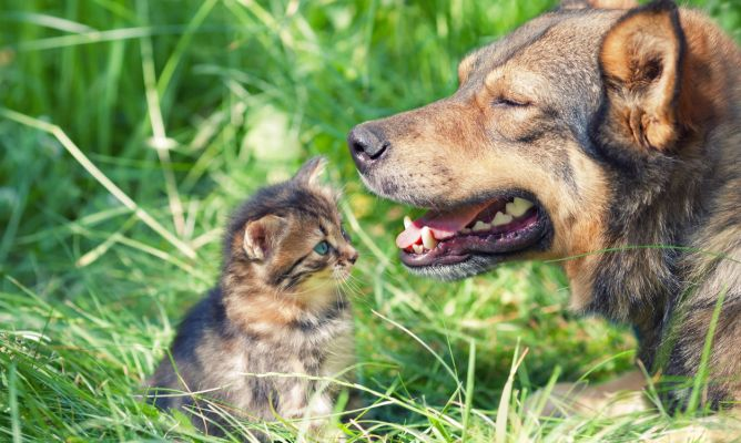 Qué Olores Les Gustan Y Molestan Más A Perros Y Gatos Hogarmania