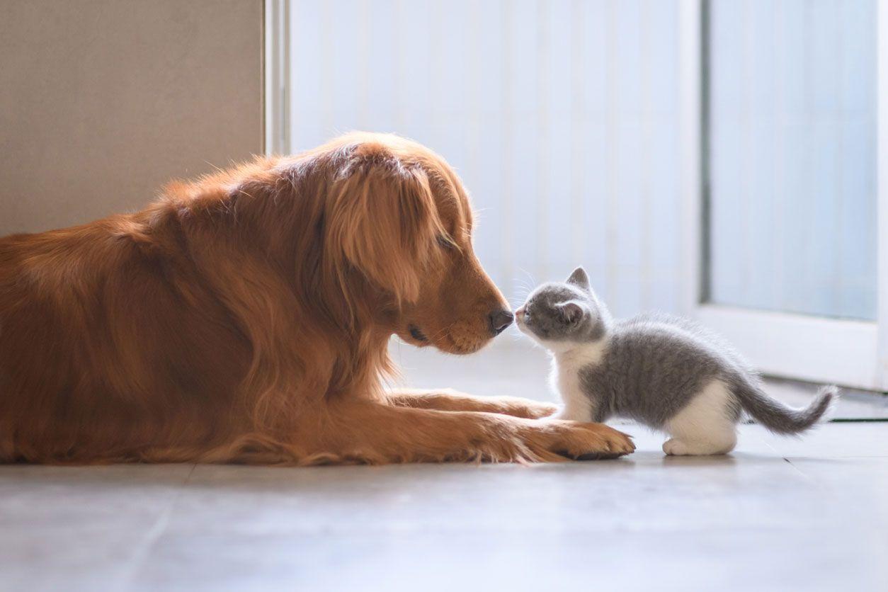 A los perros les gusta el olor de su familia y clan.