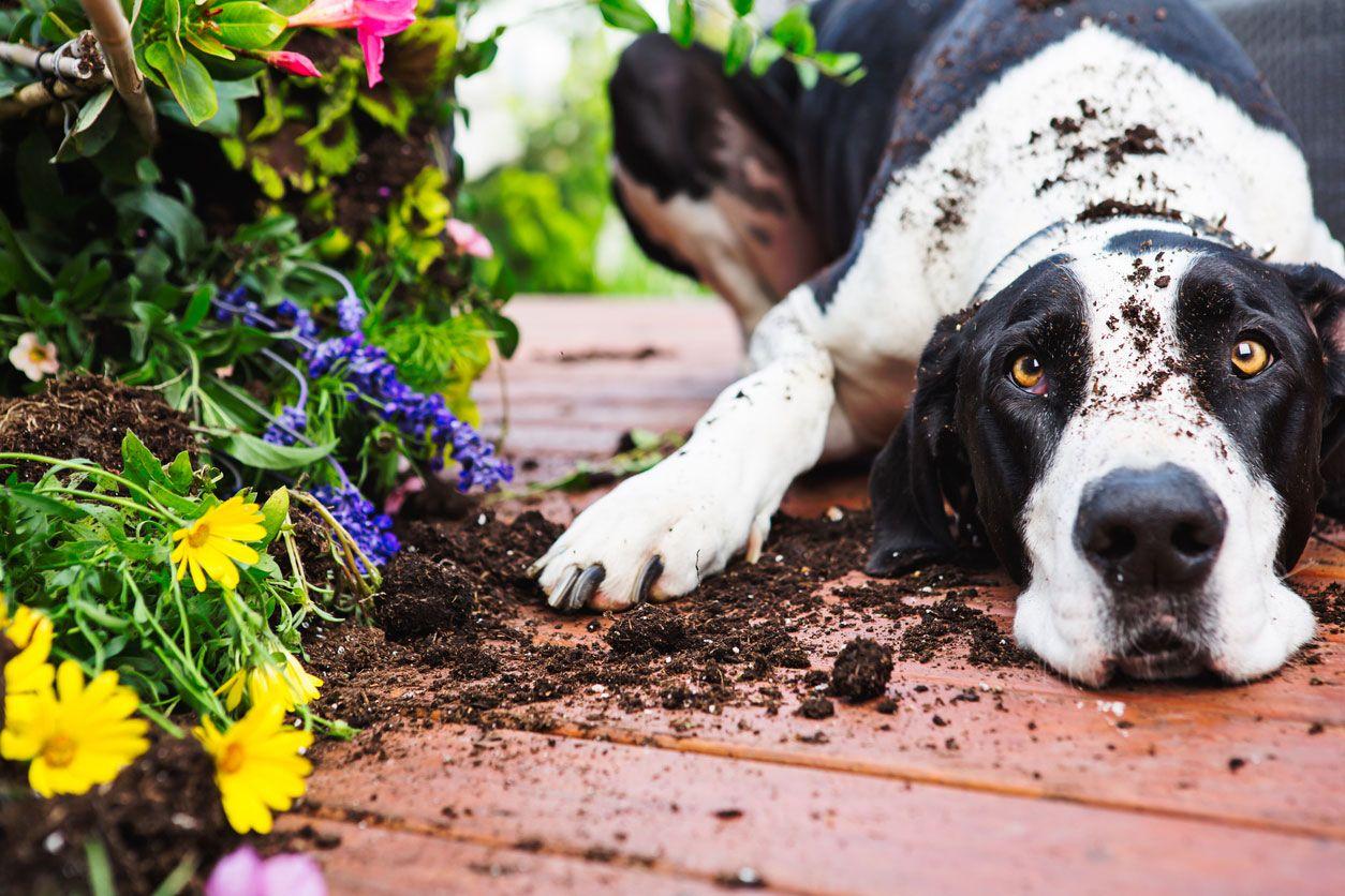 Cómo superar el miedo de los perros a la soledad.