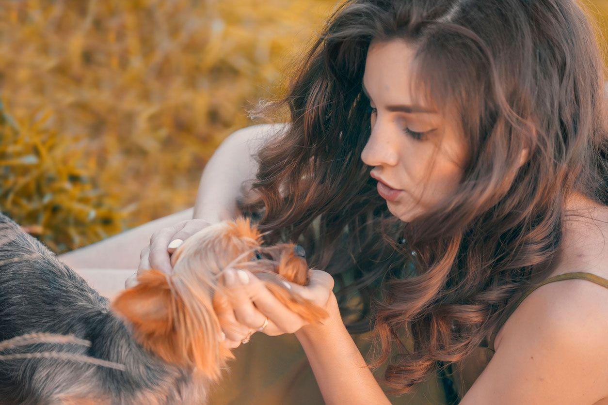 Síndrome del perro pequeño, regañar y premiar.