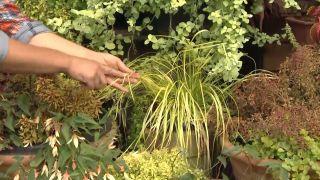 Composición de plantas en amarillos y ocres con dalias y begonias