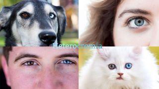 ¿Qué es la heterocromía?