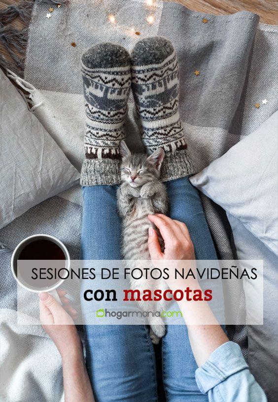 Trucos y consejos para hacer una sesión de fotos navideña a tu mascota