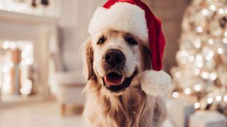 La Navidad es la época más acogedora para hacer una sesión de fotos a nuestras mascotas, ¡descubre trucos y consejos para una sesión alucinante y sin incidentes!