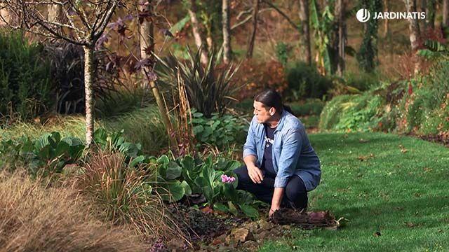 ¿Qué hago si el tallo de una hortensia de invierno se ha caído?