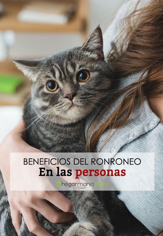 Beneficios del ronroneo de los gatos en la salud de las personas.