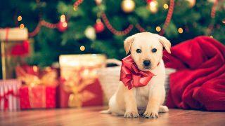 Por qué no regalar mascotas en Navidad