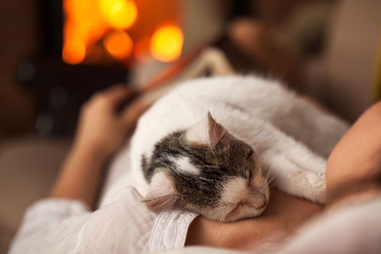 Resfriados entre mascotas y personas.