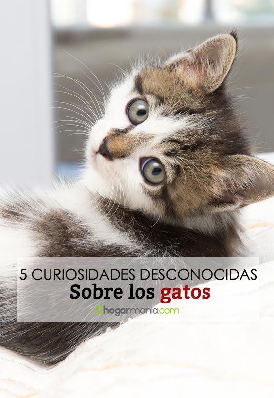 5 curiosidades de los gatos que no conocías