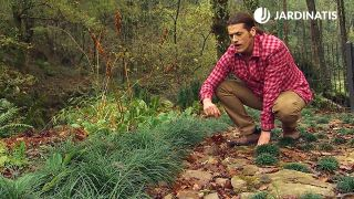 Plantas para zonas boscosas y sombrías