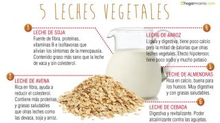 5 leches vegetales ligeras y digestivas