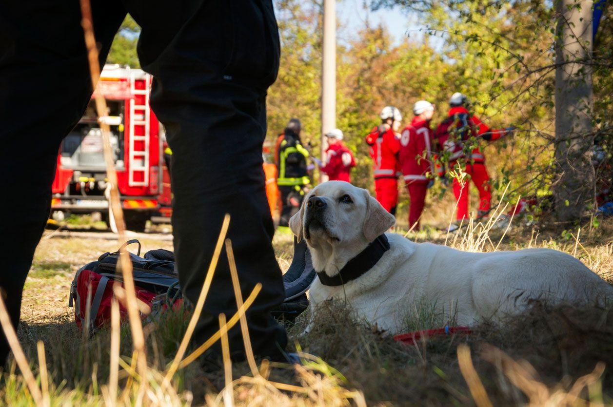 El labrador retriever como perro de rescate.