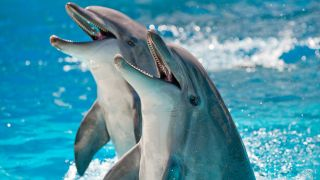 Los delfines tienen el cerebro más grande del reino animal.