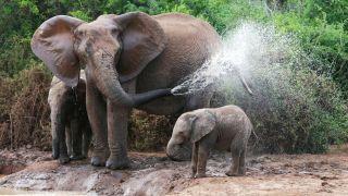 El elefante es un animal muy inteligente y con mucha memoria.