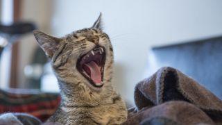 Los gatos son animales listos capaces de aprender rápidamente.