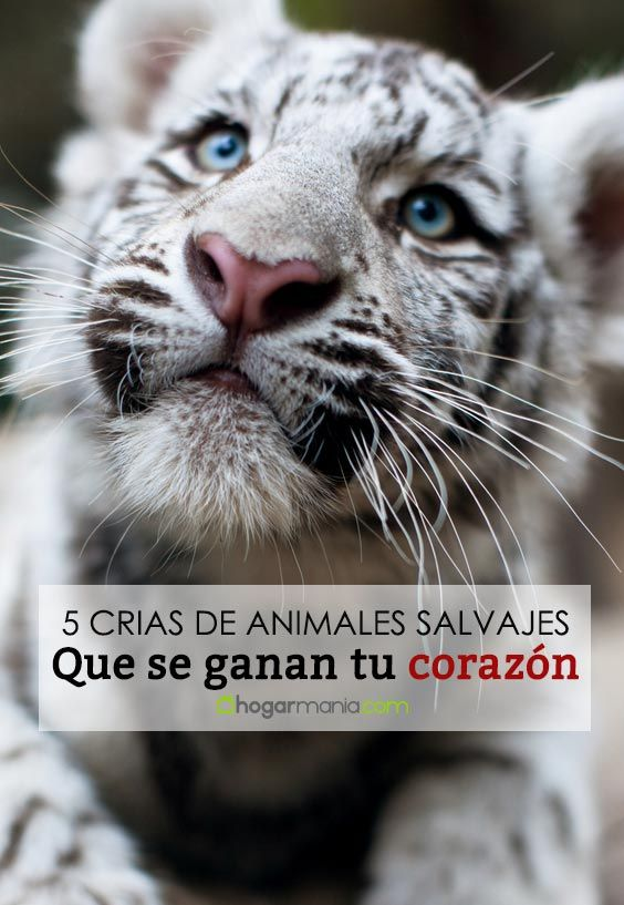 5 crías de animales salvajes que se ganarán tu corazón