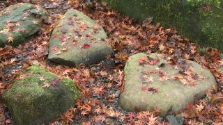 Jardín de musgos