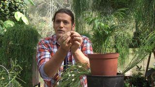 El Rhipsalis en plena floración