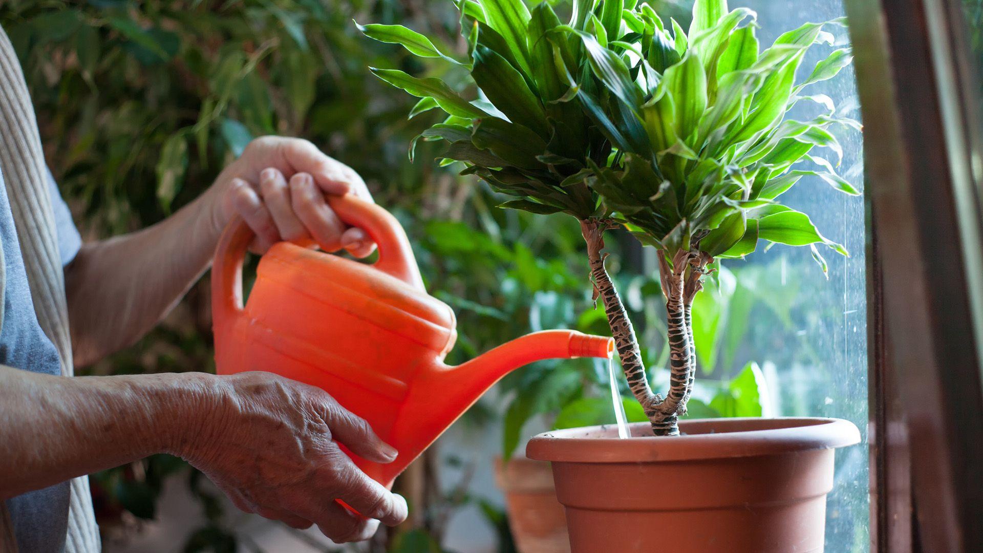 5 Consejos para evitar plagas en las plantas