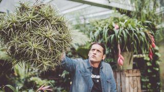 Cómo hacer crecer el clavel del aire