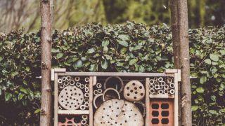 Hotel de insectos beneficiosos para la huerta