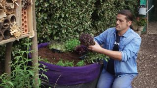 Cultivar plantas aromáticas y flores comestibles en tiestos de fibra