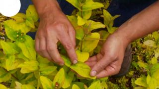 Plantas de follaje amarillo