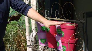 Kits para la siembra de plantas aromáticas
